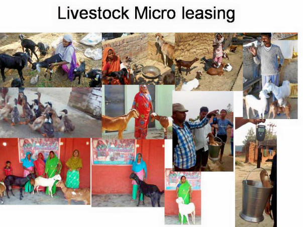 Lend a livestock - Empower an woman