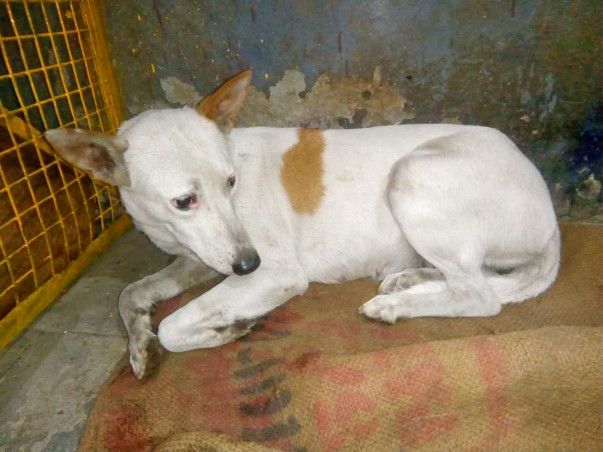 Help us build a Recovery Centre for Street Dogs in Distress