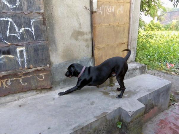 Street Dogs Care
