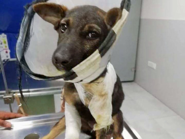 Help Dogs Receive Medical Care