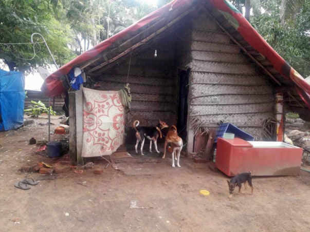 Help Sunitha And Her Rescued Animals In Kerala.