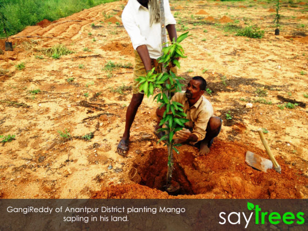 Supporting Farmers with sustainable Income through tree plantation