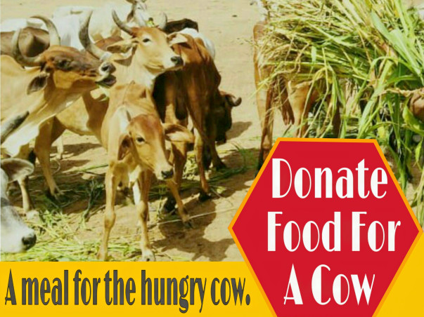 Help Animals Care In Balotra