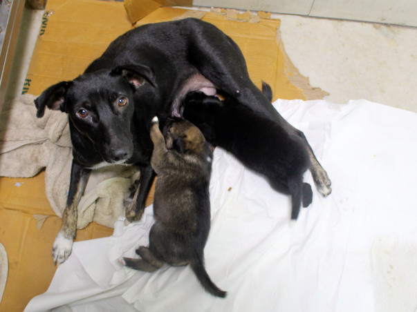 Help Coal and her Babies in their fight for life