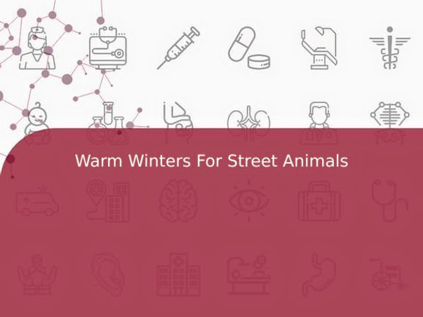 Warm Winters For Street Animals