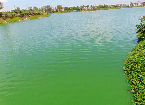 Nandi Hillathon: Restoration of Allalasandra Lake