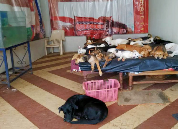 To support the feeding and welfare of 47 rescued dogs