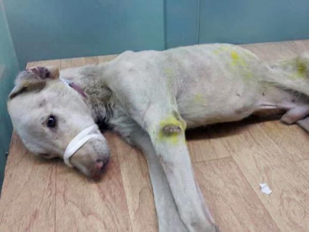 This Dog Was Hit and Run and Is In Need Of Support For Treatment.