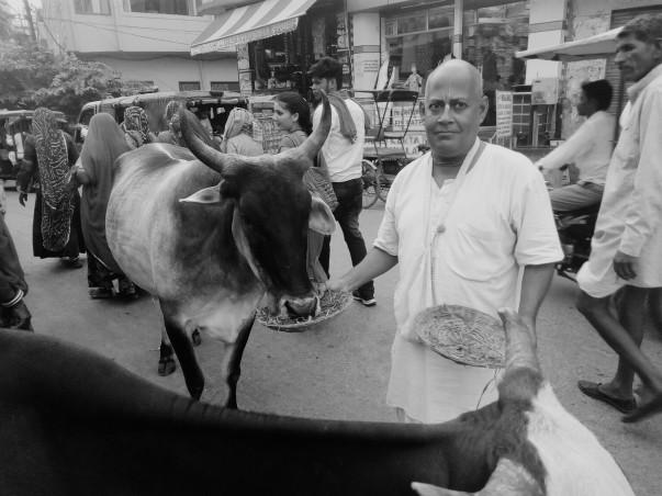 Animal Care in Vrindavan