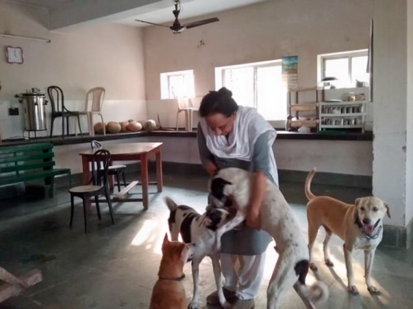 Help Chhaya raise funds to build a roof for these rescue animals