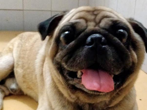 Help Disco's maggot-eaten back heal