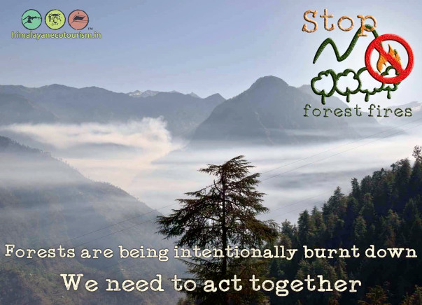 Help Save The Himalayan Forests - Step 2