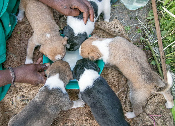 Help Feed The Street Dogs Around Bangalore