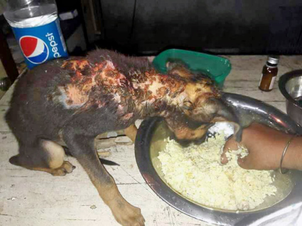 Help A Mother Of Voiceless Babies