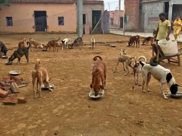 Help Voiceless Animals