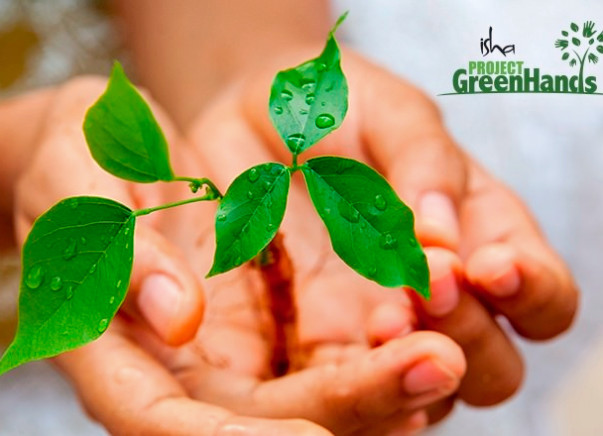 Offset your carbon footprint this World Environment Day -Anil Patro P
