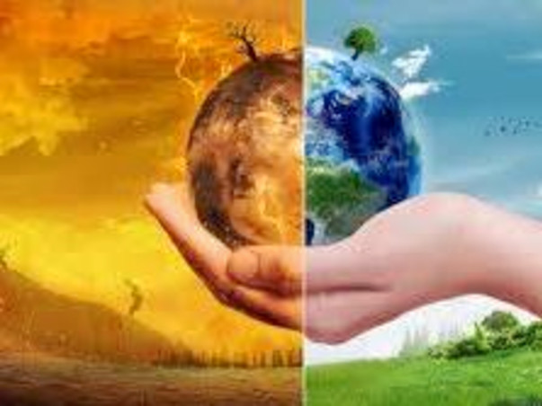 Help To Save Tree & Fight Global Warming