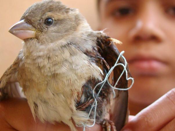 Save Birds Campaign, Uttarayan-2018