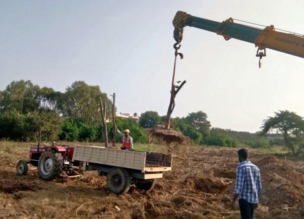 Save Whitefield - Tree Transplantation at Satya Sai Hospital