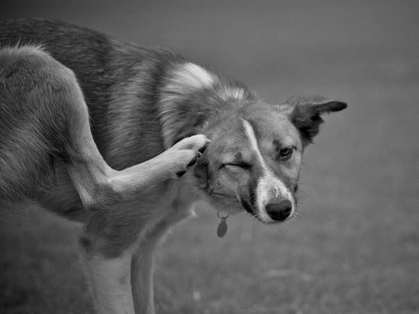 Cochin Dog Shelter