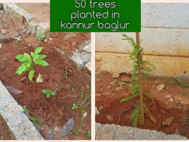 Join me in planting 15,000 trees across Bangalore