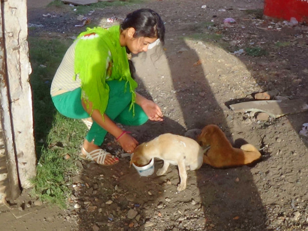 Help Us Build A Rehab Center & Treatment Unit For Stray Animals