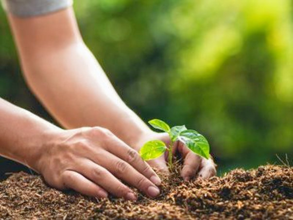 Plant Trees with Project Green Hands! #saveyourselves #saveearth