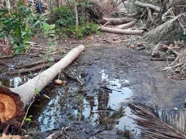 Help Cyclone Gaja impacted farmers to live again