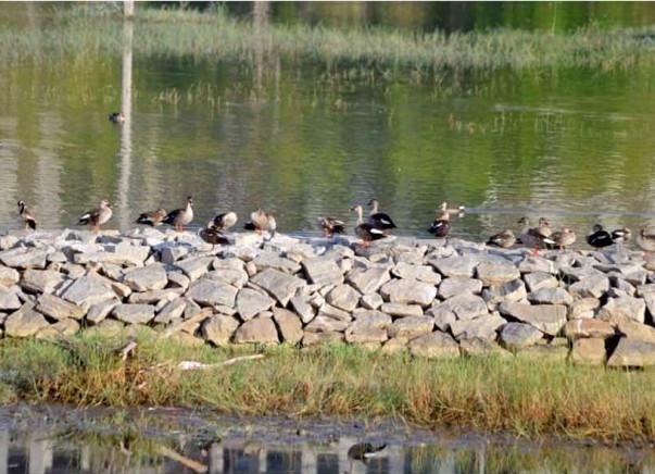 Peace Ride: Kaikondranahalli Lake Restoration, Sarjapur