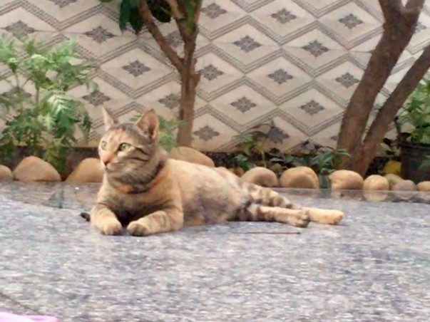 Feral Cats Of Gurgaon