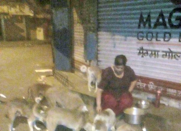 Feeding Program, Vaccination drives&Emergency fund for Vikhroli Strays