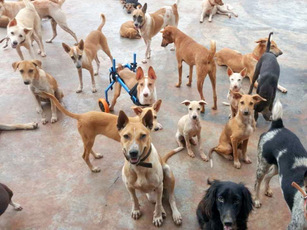 Help WSA Provide A Better Life To The Voiceless Strays
