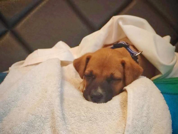 Help to fund Kimi's travel to his new Family!