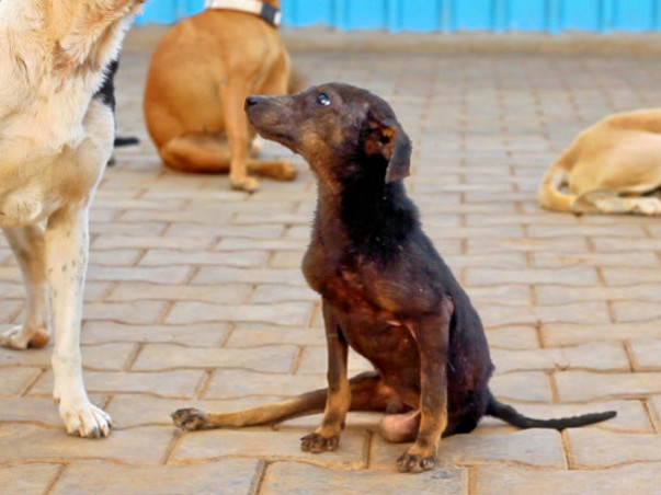 Help Haris Ali to build a better shelter for his rescued doggies
