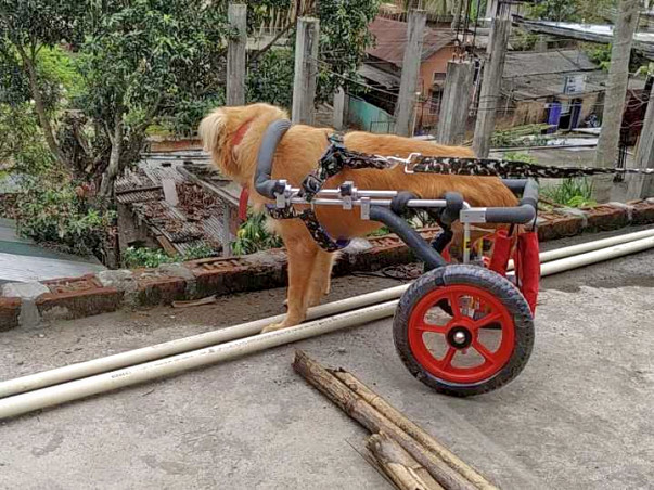 Help in treatment of rescued animals