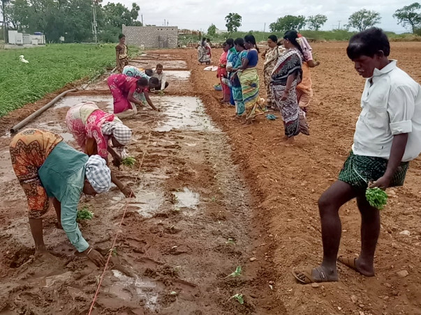 Pudamithalli Women's Farmers Project