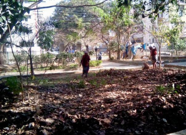 Nandi Hillathon: Shredding and composting of dry leaves in HSR Layout