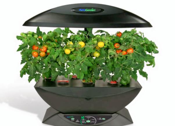 I am pledging my birthday to indoor Tomato growing