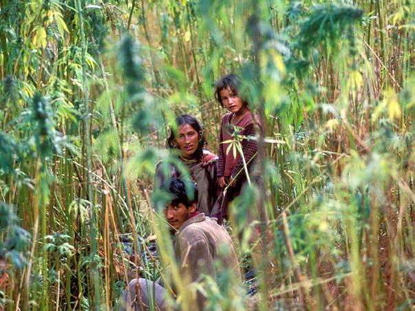 SAVE HEMP FARMERS Of HIMALAYA