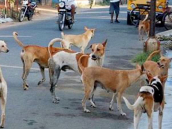 House of Paws- Stray Dogs Shelter