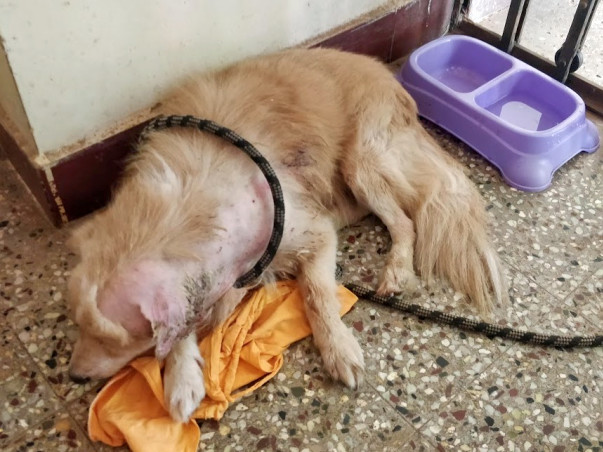 Help Lavanya nurse Bailey's ear injury