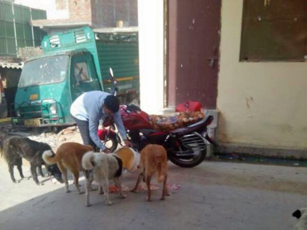 Do support over 1000 street dogs' during Covid-19 crisis in India