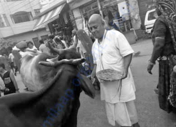 Animal Care in Vrindavan