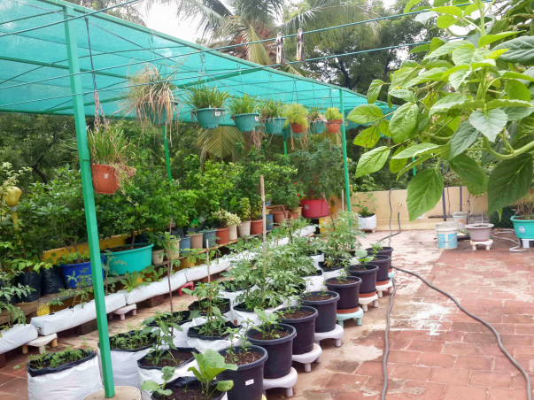 Urban farming initiative for Roof-Tops with solar pannels