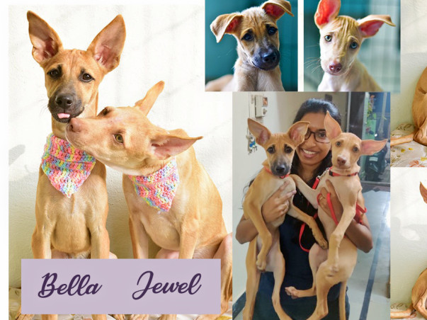 Help Bella And Jewel Stay United With Their Rescue Mom