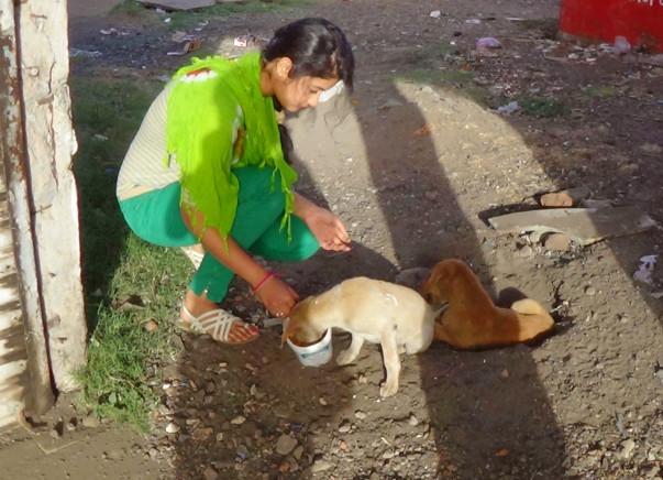 Help Us Build A Rehab Center & Treatment Unit For Stray Animals