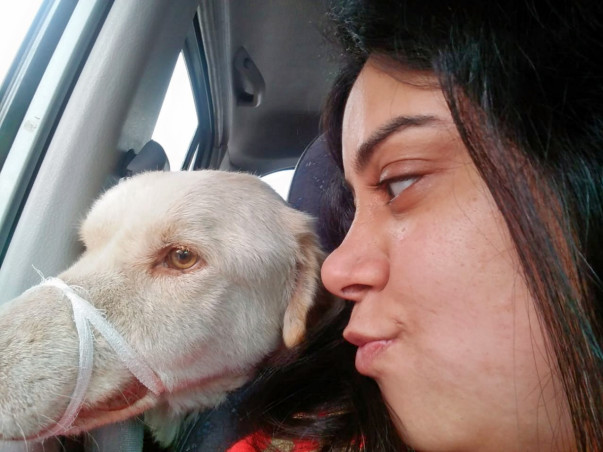 Help Homeless Sick Dogs to lead a Happy Life