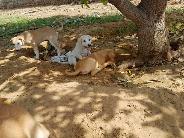 Wagging Tales Home For Abandoned & Rescued Dogs