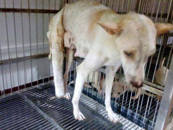 Help Us Pay For The Treatment Cost Of An Abused Mother Dog