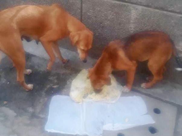 Help Preeti Feeding Dogs